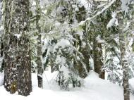 snowshoe trip at Mt Baker