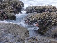 river of sea creatures