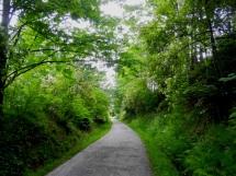 Spring green trail