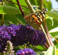 butterfly in the secret garden