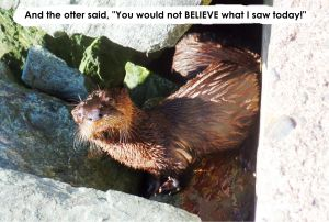 baby otter checking me out