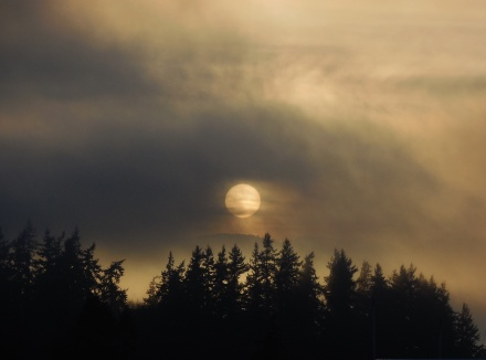 sun through the fog in Bellingham