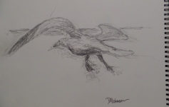 Drawing of Seagull by my dad, Dee Molenaar