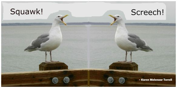 Dueling seagulls