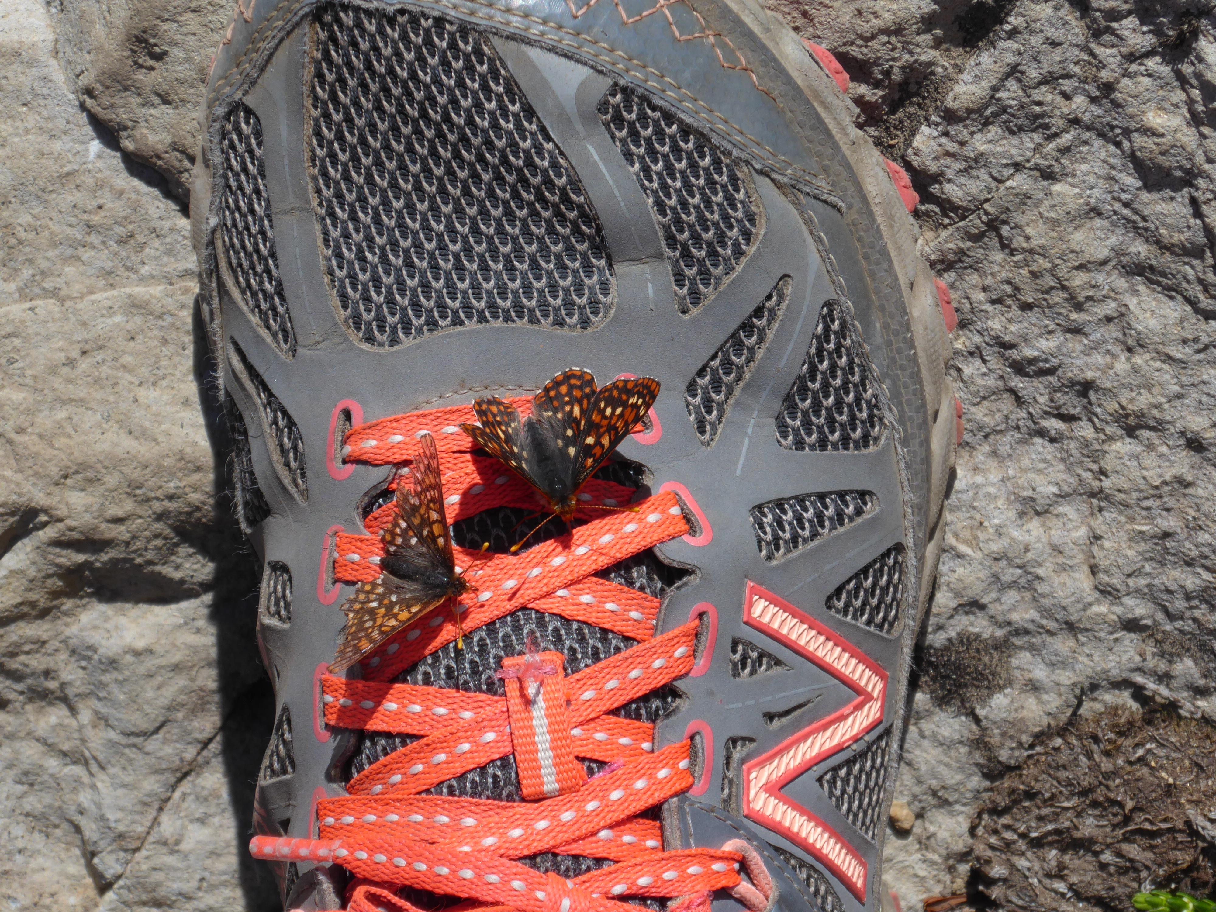 butterflies on my shoe luminex