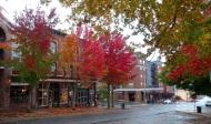 autumn in Bellingham