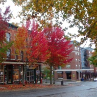 autumn in Bellingham