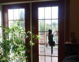 Clara climbing the door...