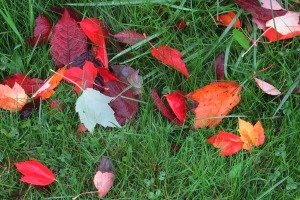 autumn leaves 3 this one