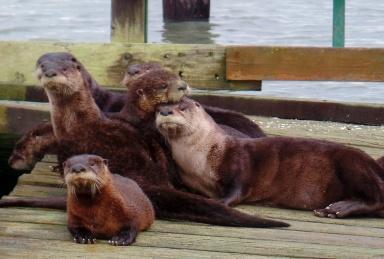Otter Party (Karen Molenaar Terrell)