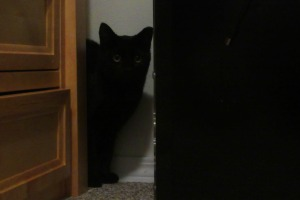 Sparky the black cat 2