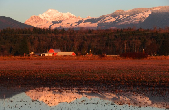Mount Baker, a Red Barn, and a Reflection