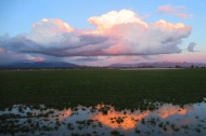 Reflection of Sunset in Skagit County, WA.