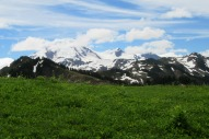 Shuksin and a Mountain Meadow