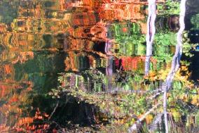 Autumn Reflection on Lake Padden