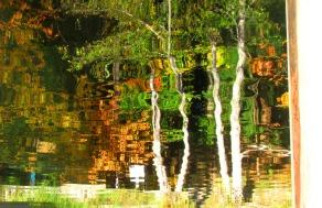 Flipped Autumn Reflection, Lake Padden, Bellingham, WA