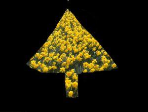 daffodil christmas tree