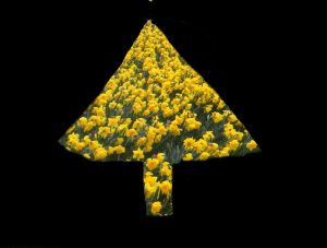 daffodil christmas tree