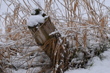 fence in the snow this one