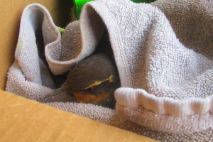 little bird who flew into our window