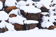 logs in snow this one