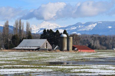 Mount Baker behind a barn in Skagit County, WA.