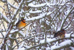orange birds in tree 2 this one