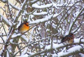 orange birds in tree 2 this one