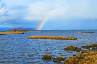 Rainbow Over Padilla Bay