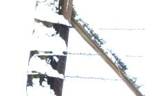 snow on fence this one