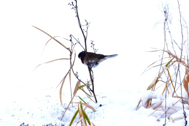 bird in snow this one