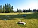 Bow Cemetery #3