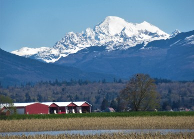 mount baker red barns this one easter (4)